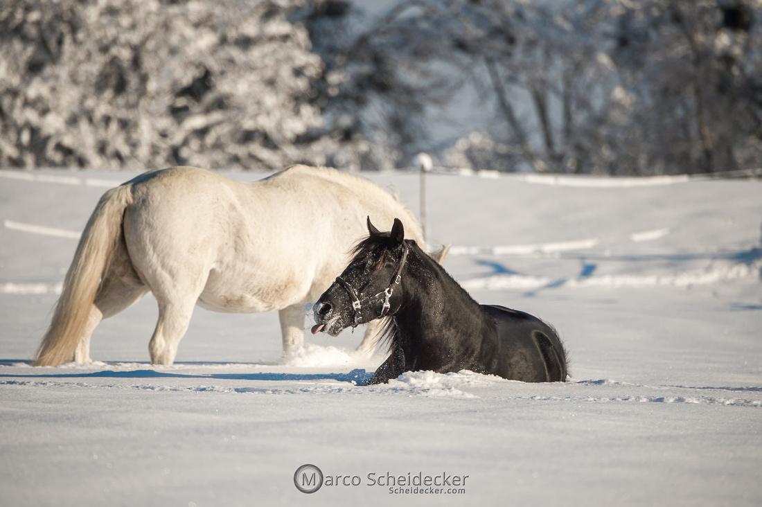 C2021-01-16-2023  -  Spass im Schnee