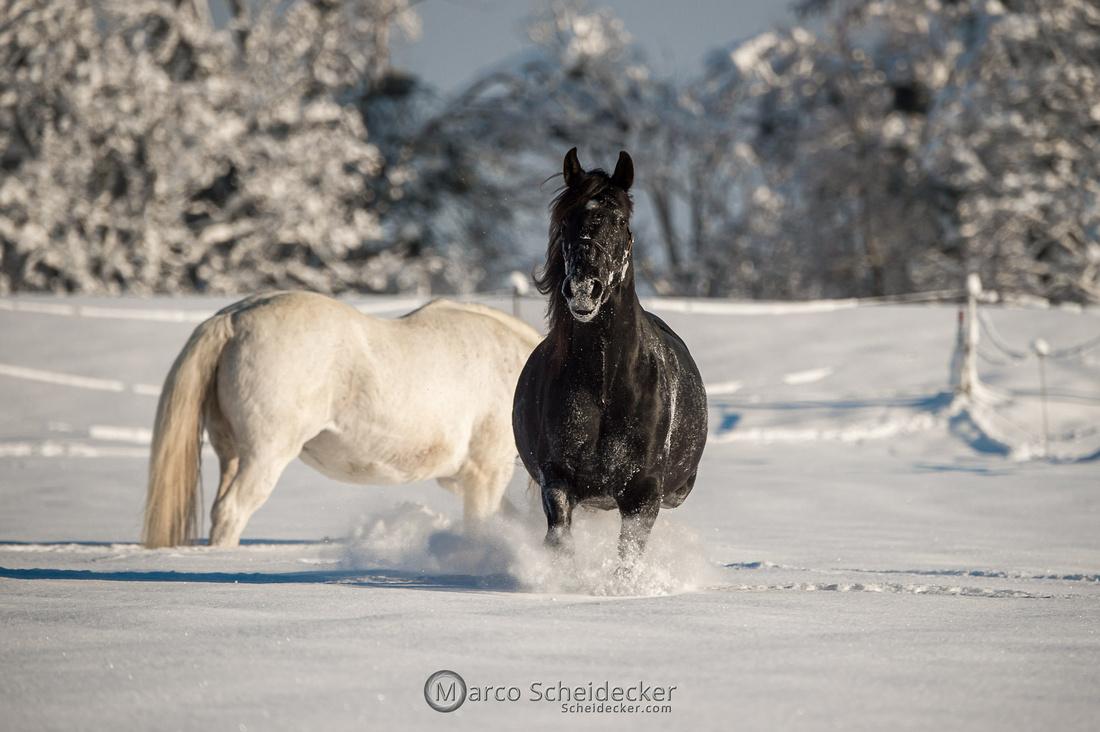 C2021-01-16-2039  -  Spass im Schnee