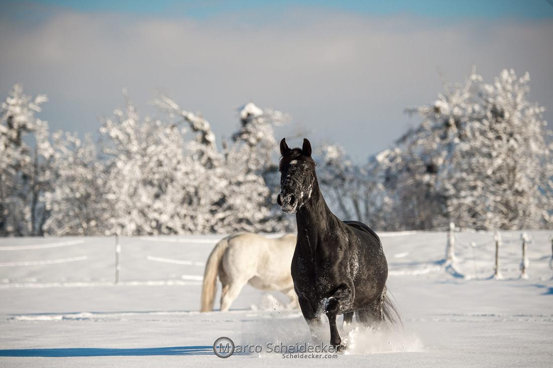 C2021-01-16-2071  -  Spass im Schnee