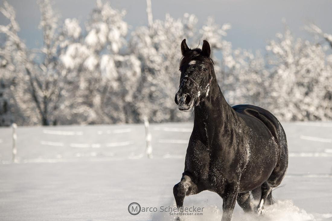 C2021-01-16-2077  -  Spass im Schnee