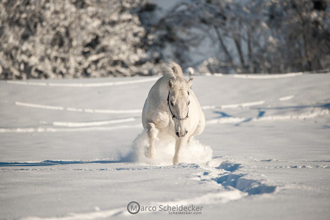 C2021-01-16-2104  -  Spass im Schnee
