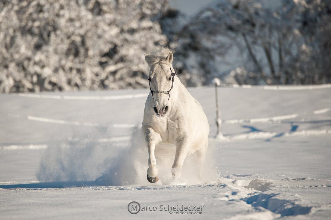 C2021-01-16-2106  -  Spass im Schnee