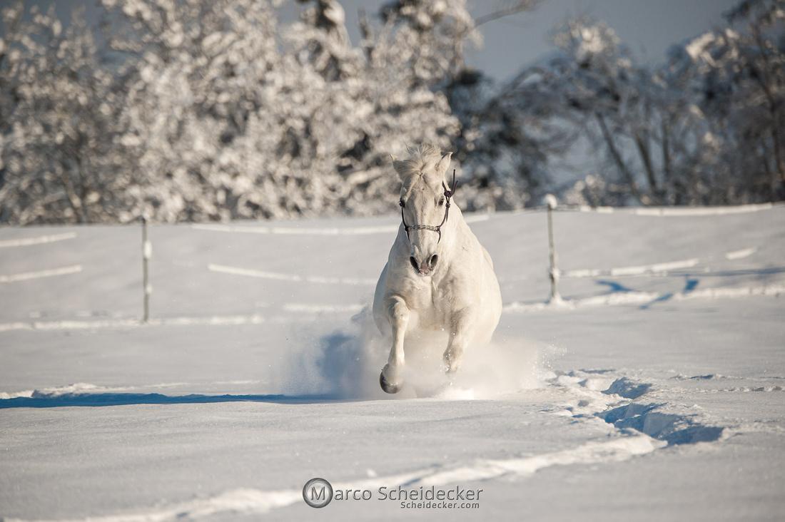 C2021-01-16-2109  -  Spass im Schnee