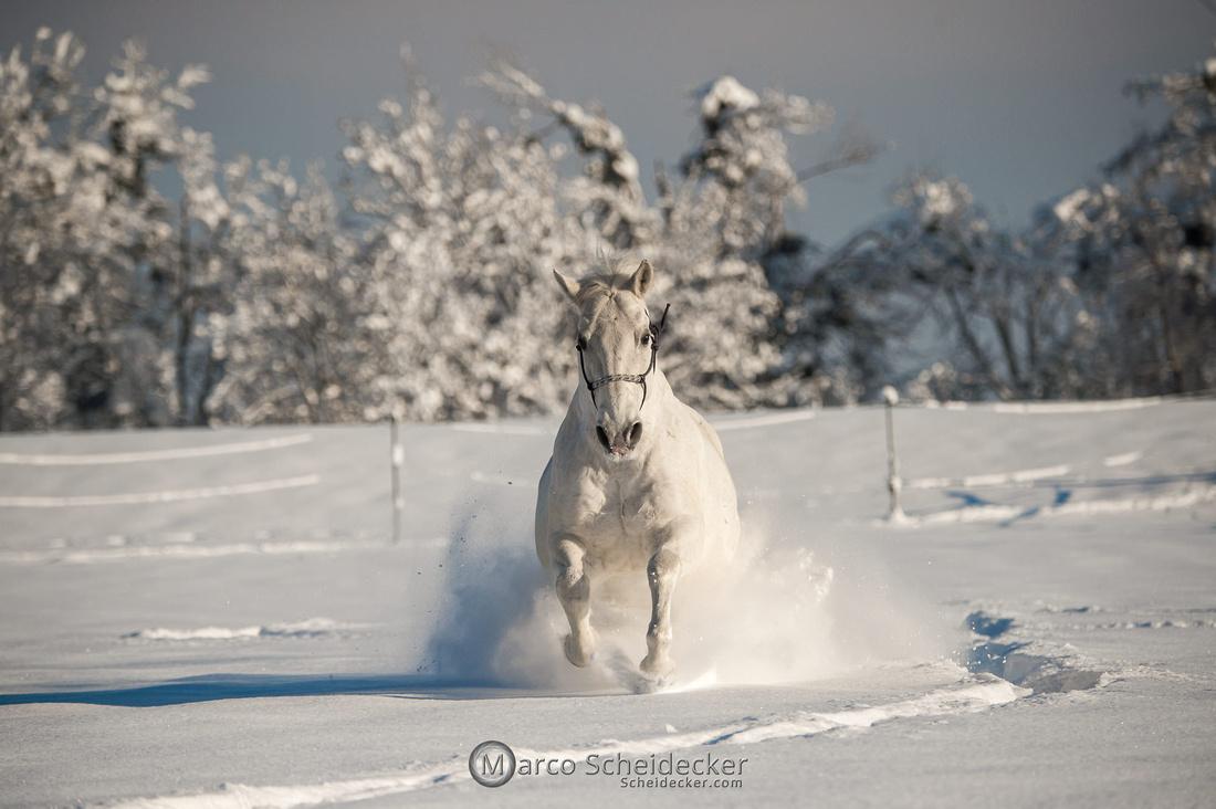 C2021-01-16-2121  -  Spass im Schnee