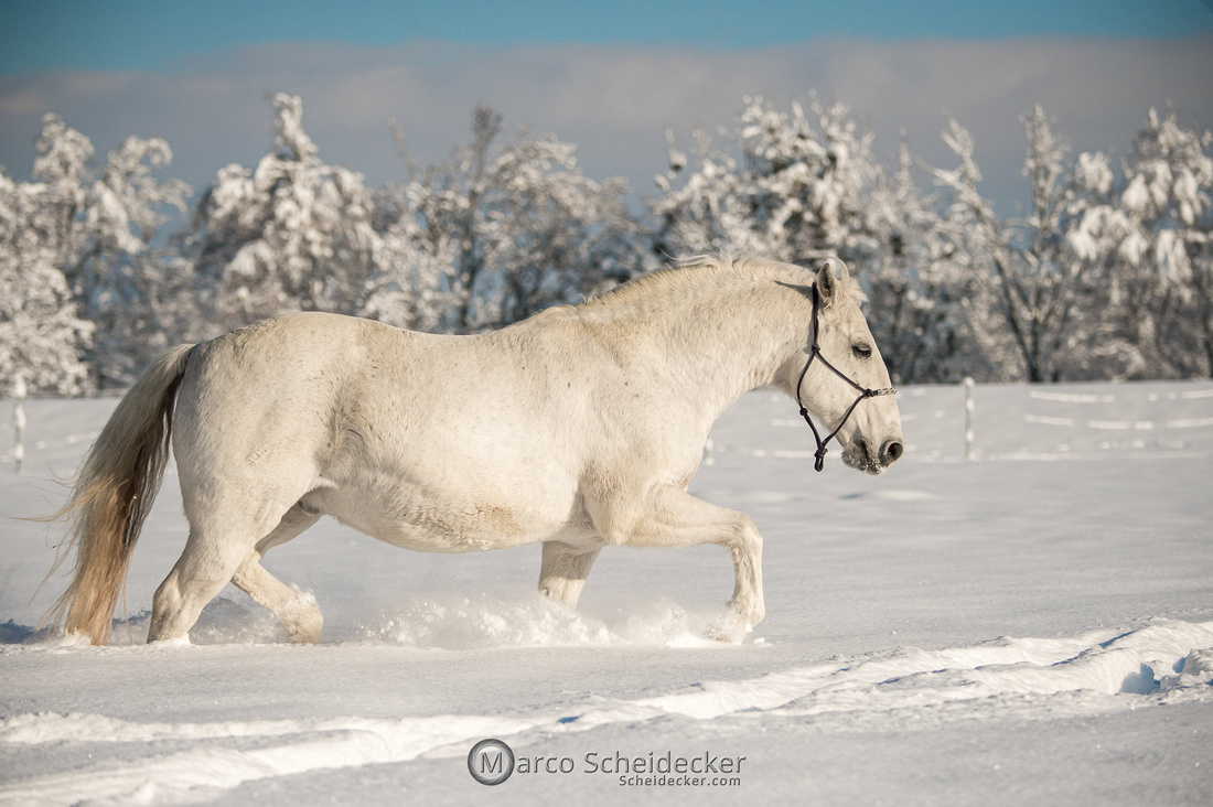 C2021-01-16-2140  -  Spass im Schnee