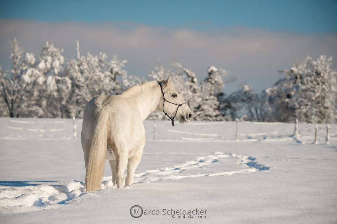 C2021-01-16-2152  -  Spass im Schnee