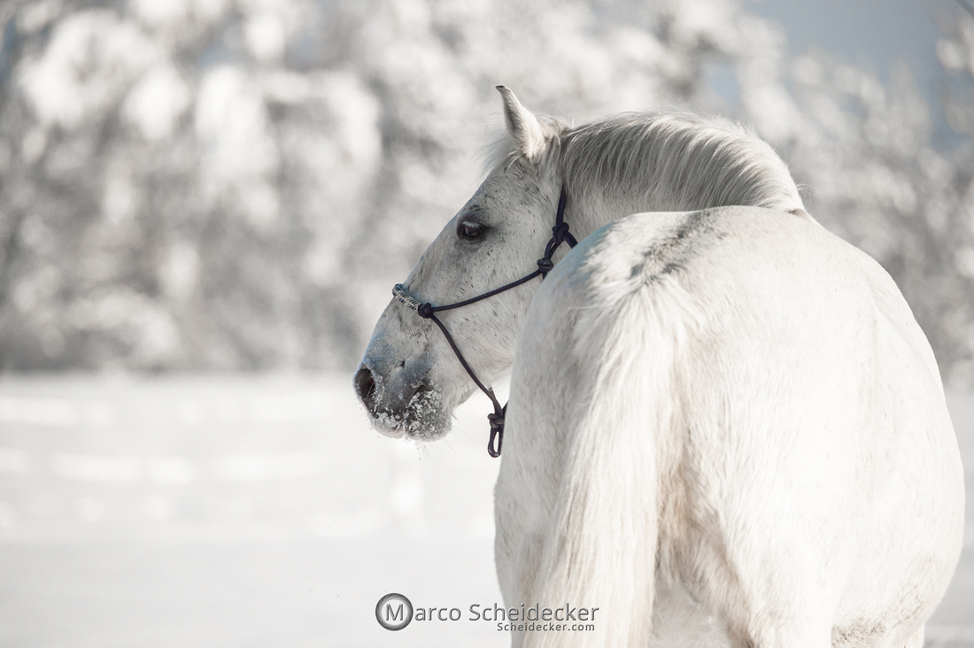 C2021-01-16-2160  -  Spass im Schnee