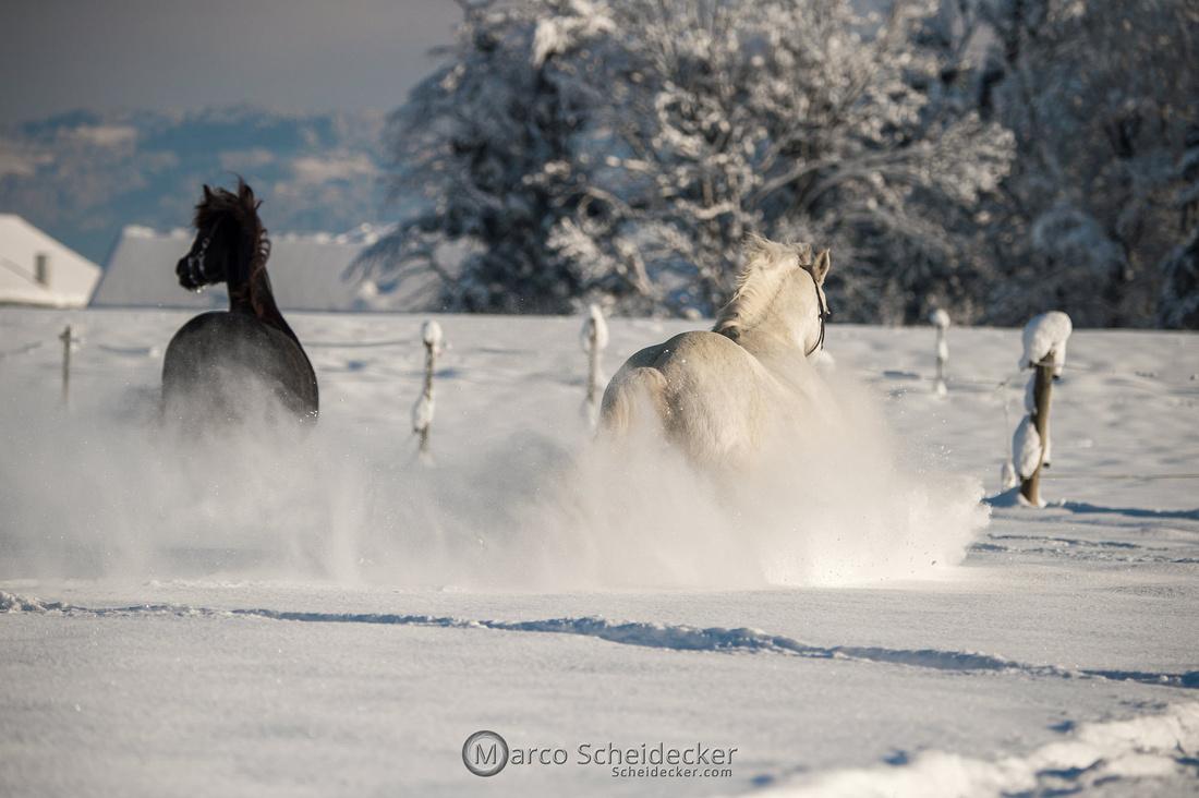 C2021-01-16-2166  -  Spass im Schnee