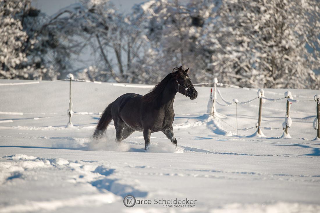 C2021-01-16-2186  -  Spass im Schnee