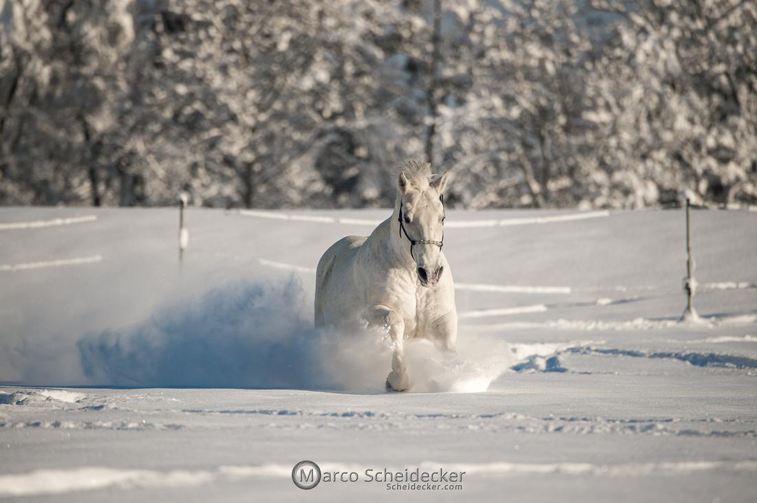 C2021-01-16-2192  -  Spass im Schnee