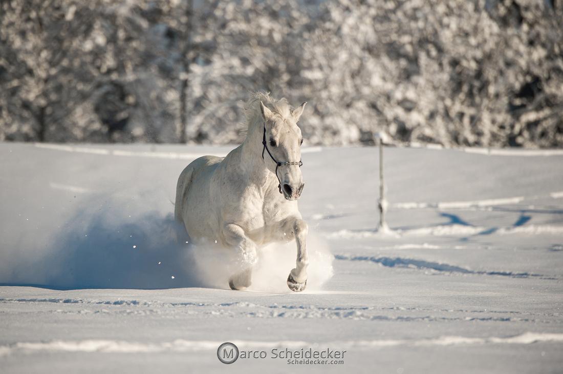 C2021-01-16-2196  -  Spass im Schnee
