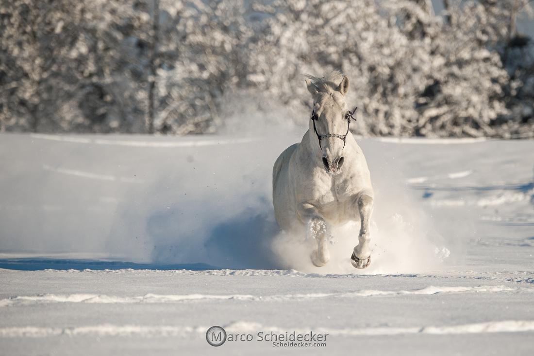 C2021-01-16-2202  -  Spass im Schnee