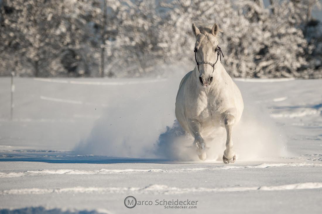 C2021-01-16-2206  -  Spass im Schnee