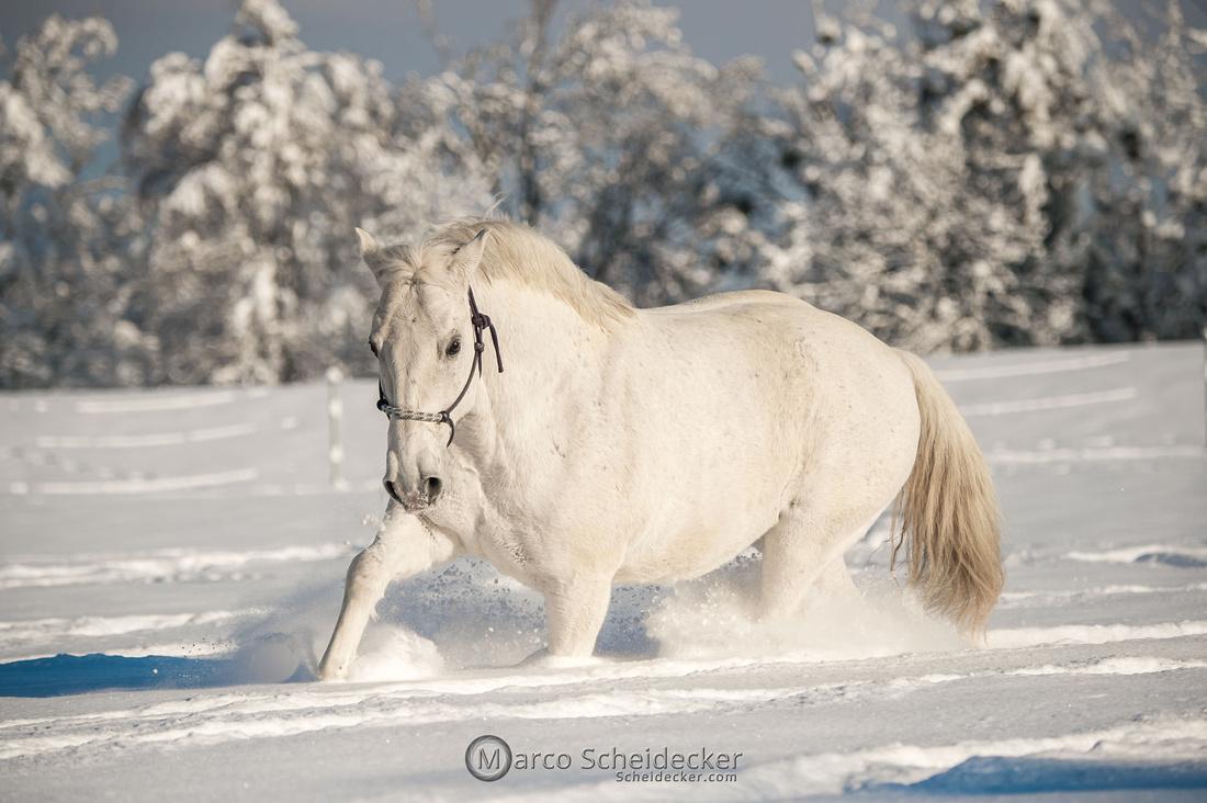 C2021-01-16-2235  -  Spass im Schnee