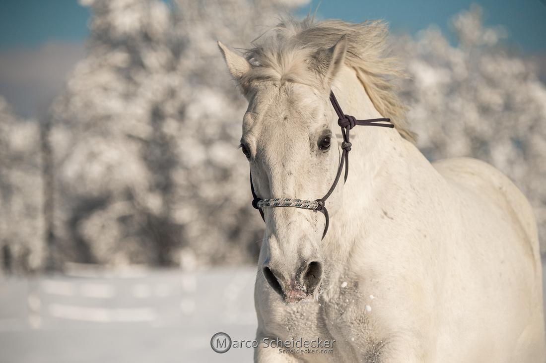 C2021-01-16-2254  -  Spass im Schnee