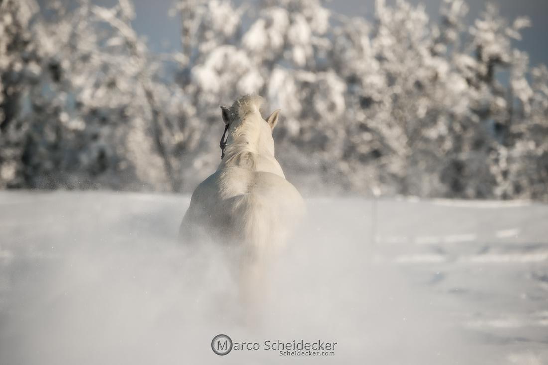 C2021-01-16-2260  -  Spass im Schnee