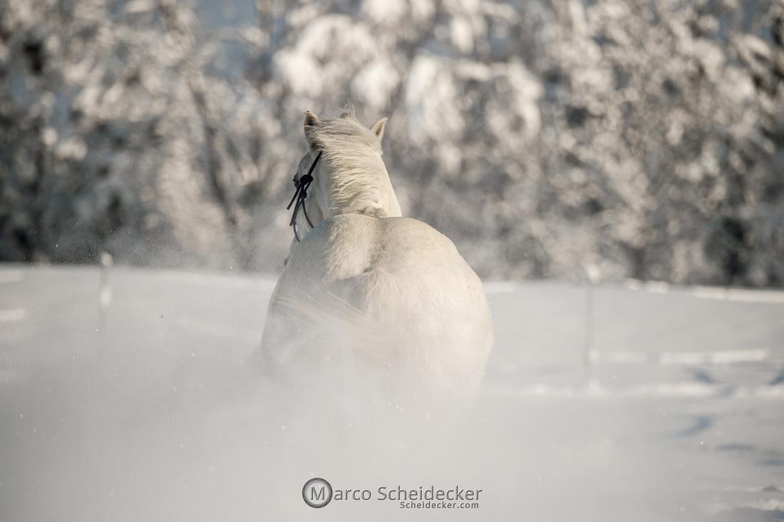 C2021-01-16-2262  -  Spass im Schnee