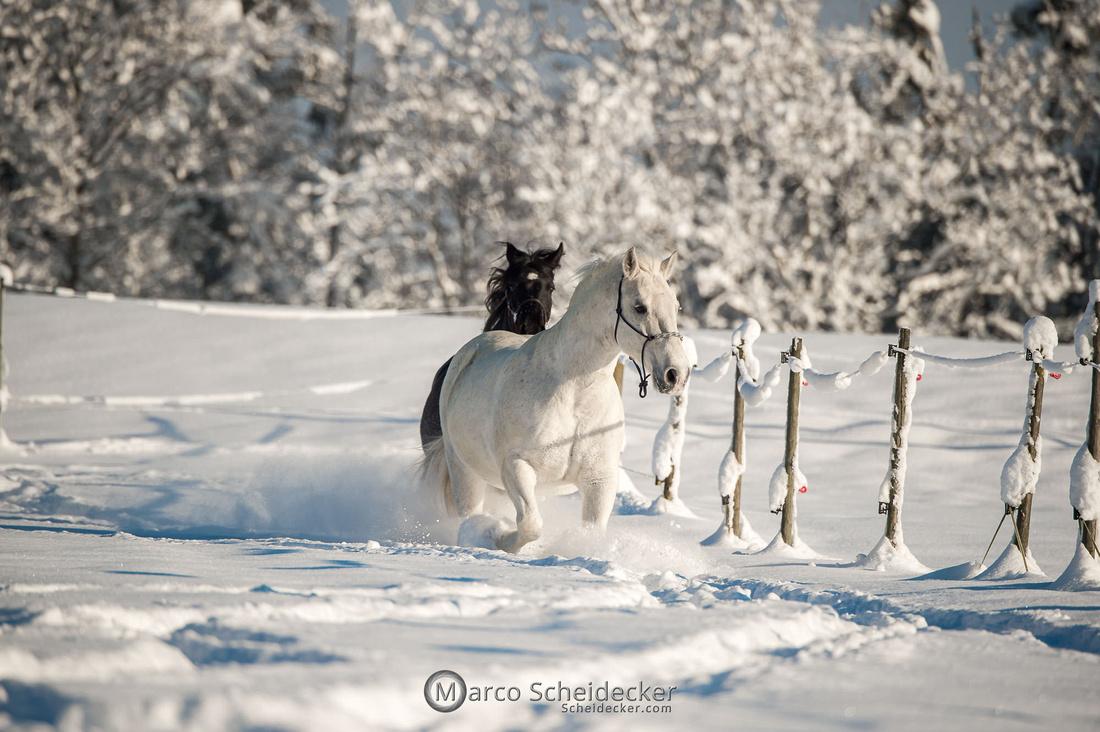 C2021-01-16-2283  -  Spass im Schnee