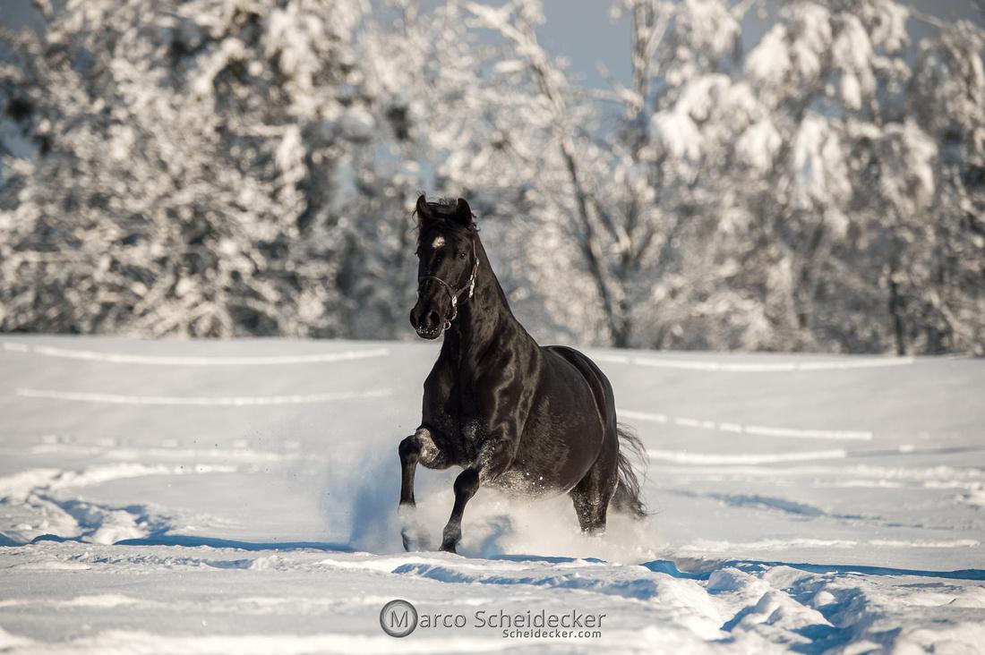 C2021-01-16-2304  -  Spass im Schnee