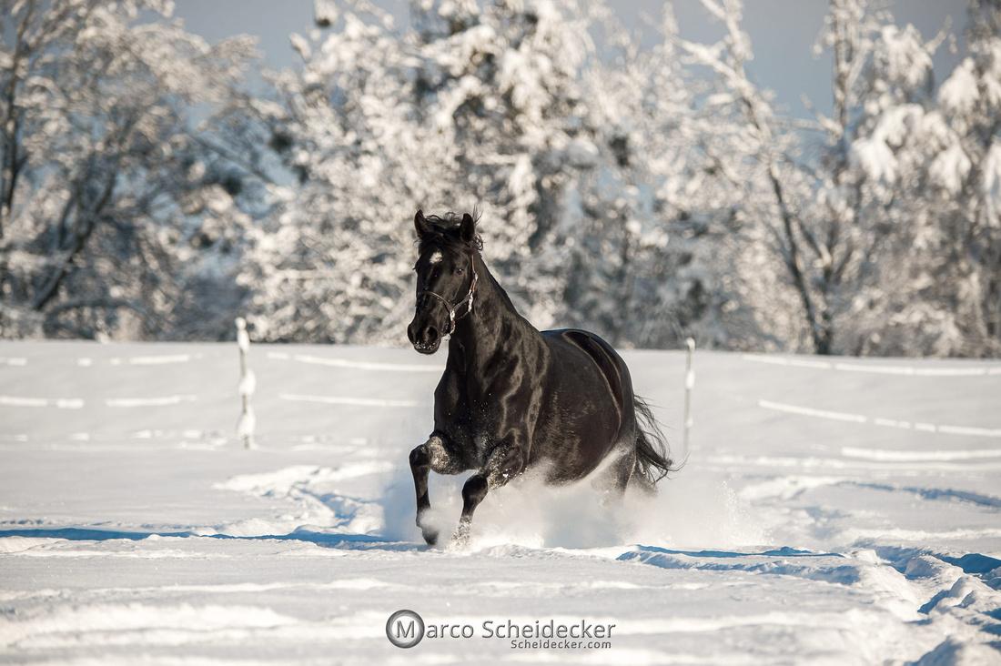 C2021-01-16-2309  -  Spass im Schnee