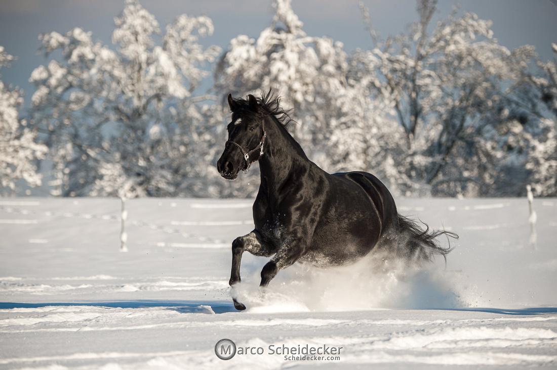 C2021-01-16-2319  -  Spass im Schnee