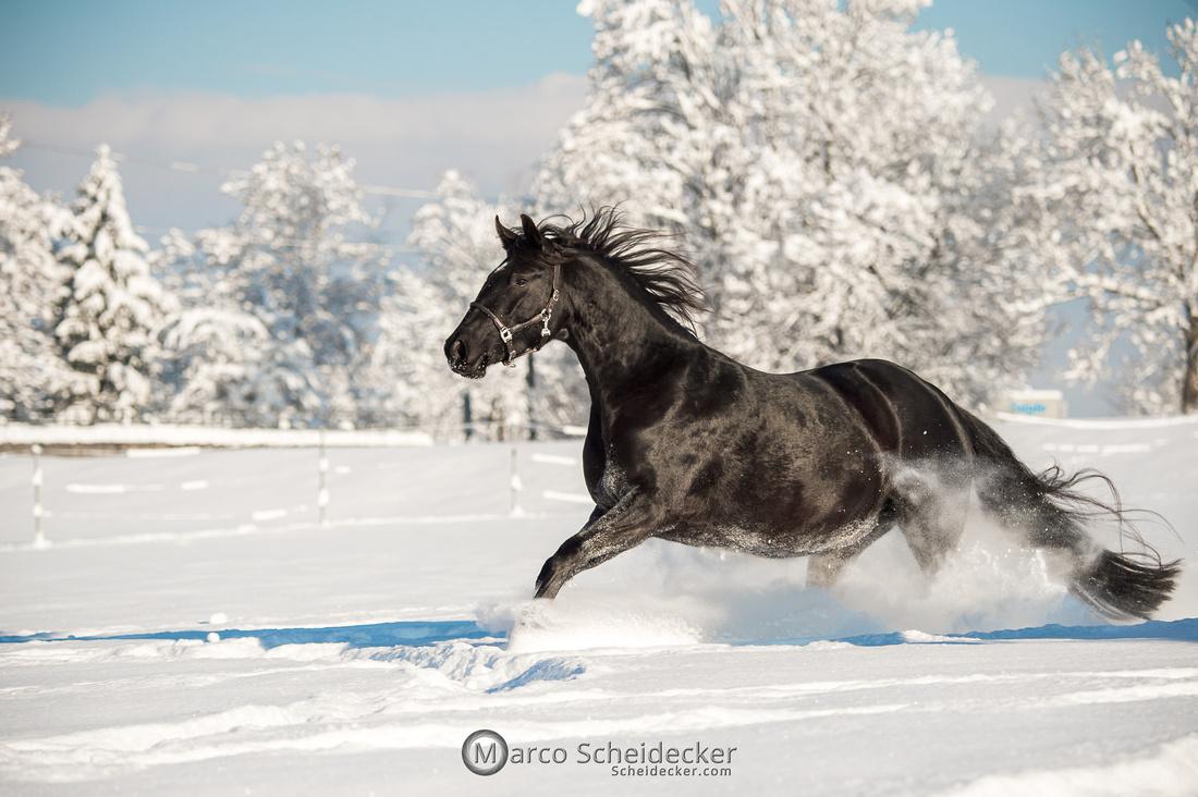 C2021-01-16-2326  -  Spass im Schnee