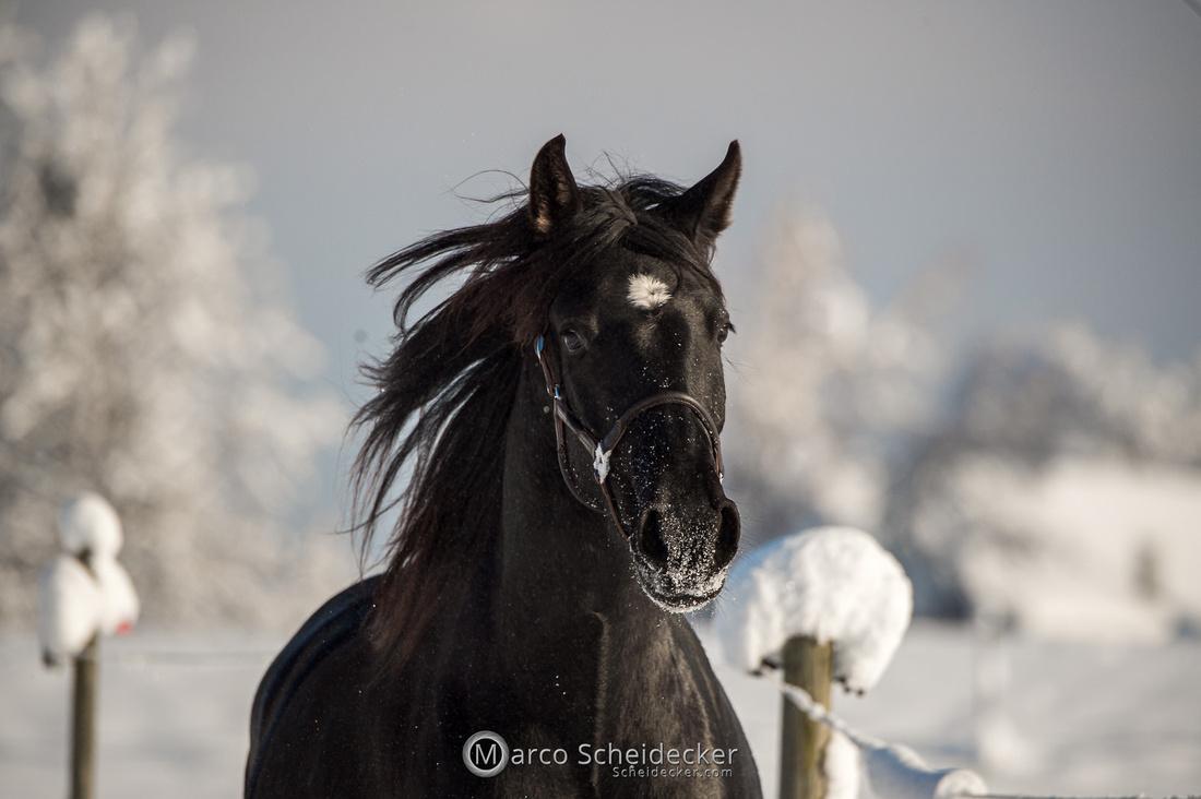 C2021-01-16-2349  -  Spass im Schnee