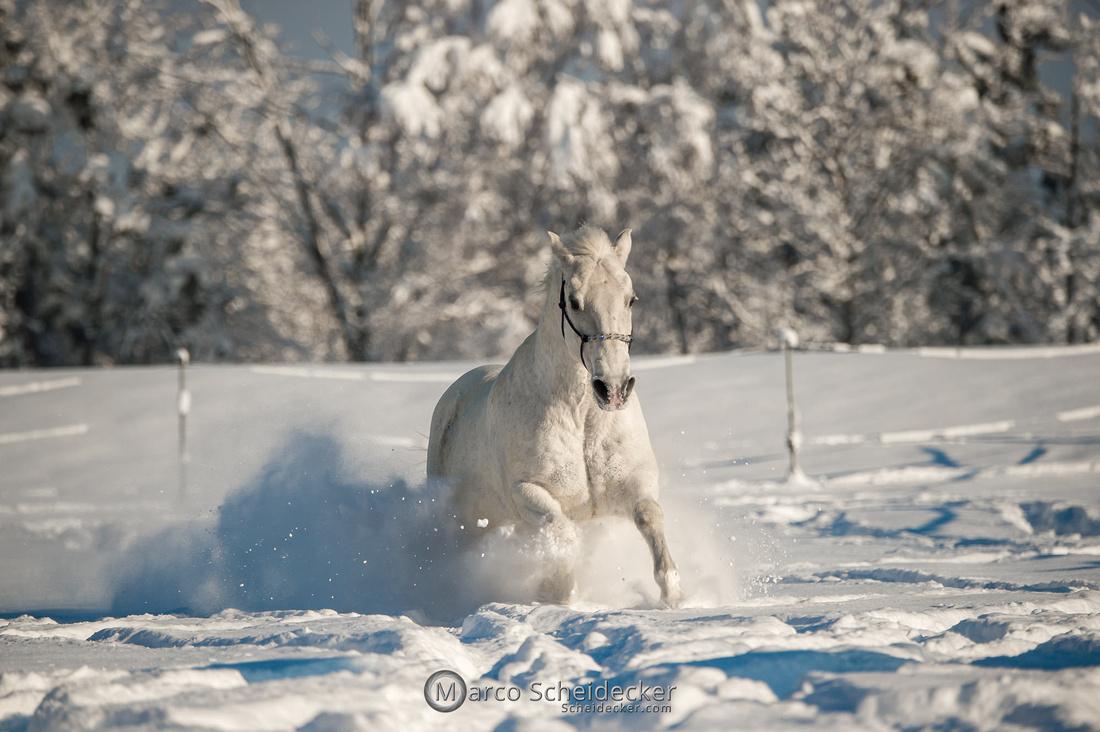C2021-01-16-2373  -  Spass im Schnee