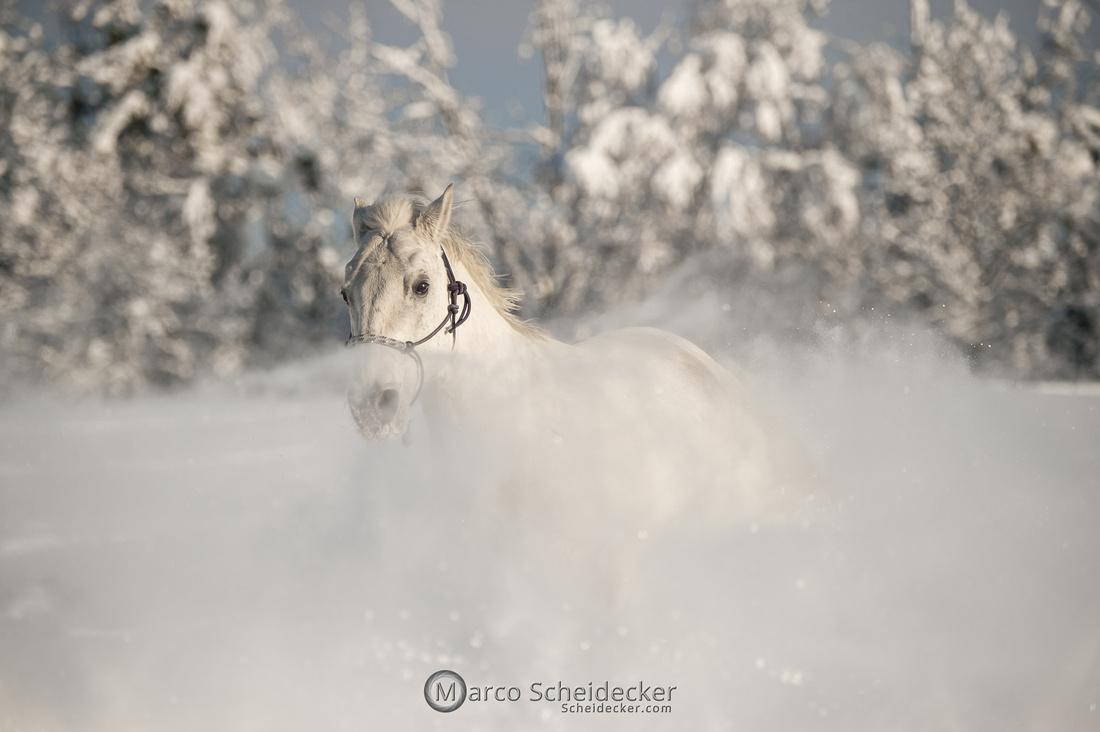 C2021-01-16-2383  -  Spass im Schnee