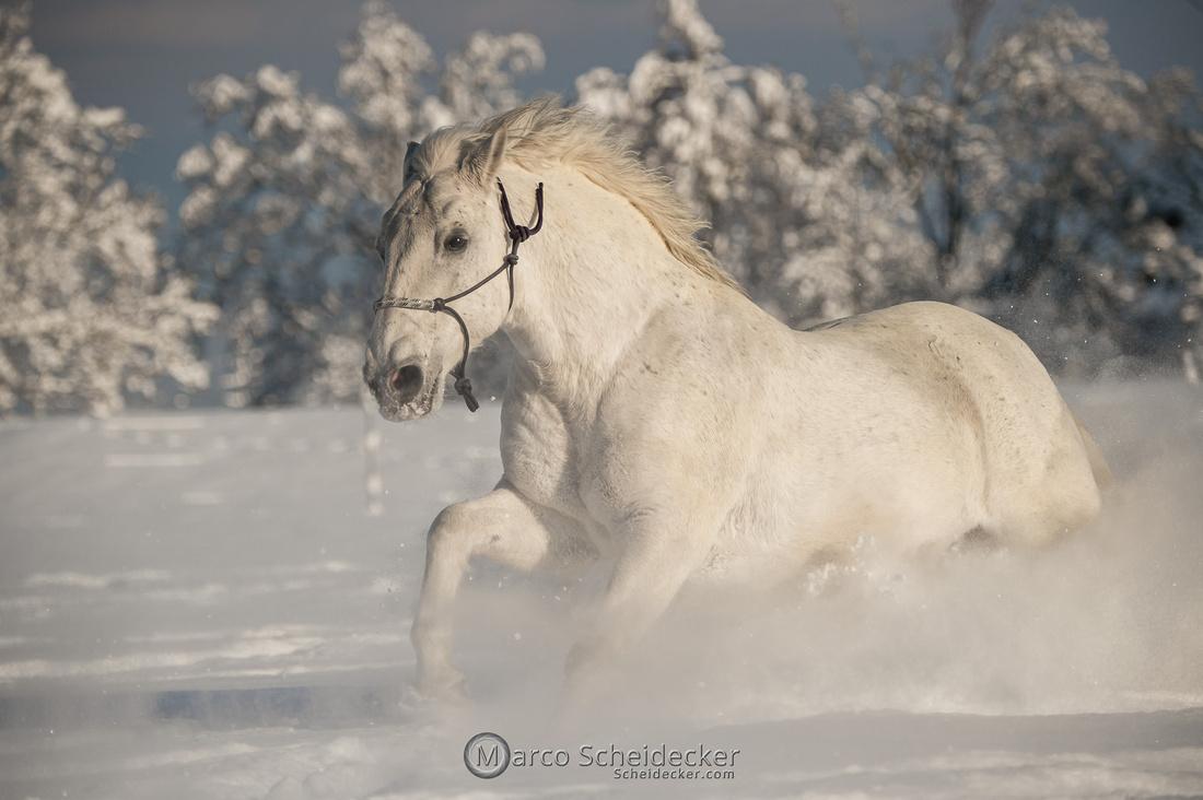 C2021-01-16-2387  -  Spass im Schnee