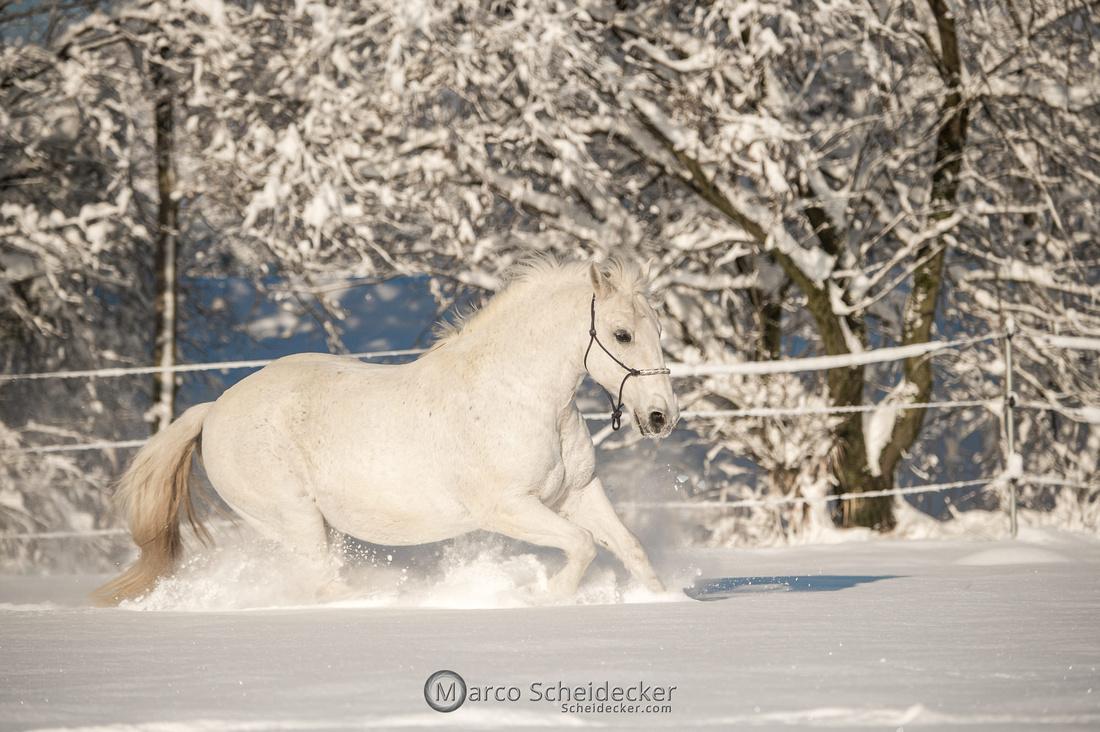 C2021-01-16-2396  -  Spass im Schnee