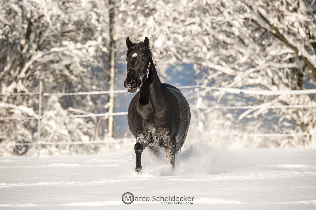 C2021-01-16-2408  -  Spass im Schnee