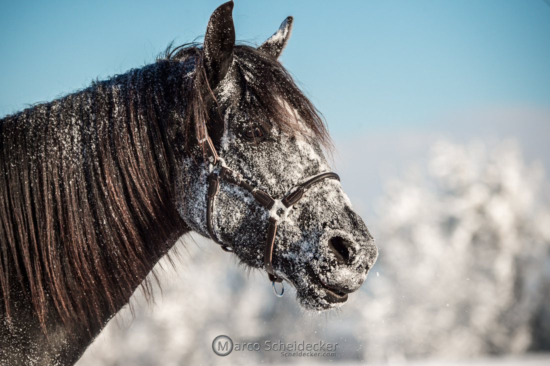 C2021-01-16-2440  -  Spass im Schnee
