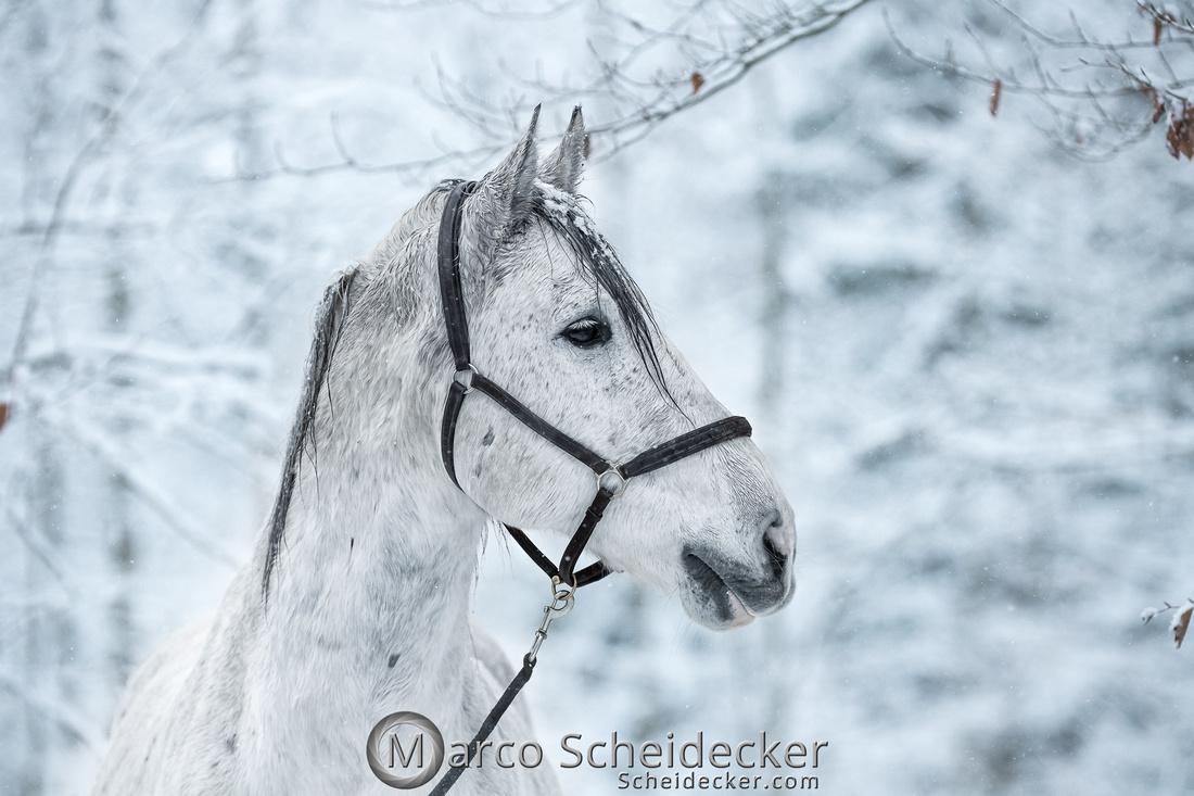 C2019-01-05-0151  -  Gregi im Schnee