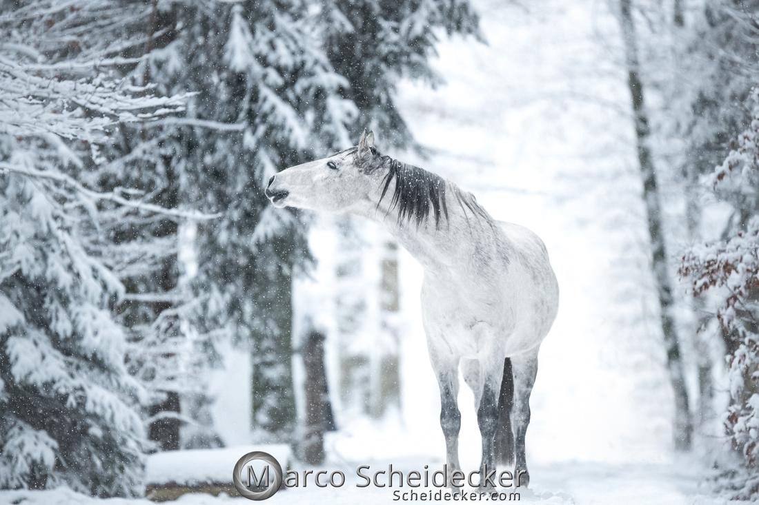 C2019-01-05-0203  -  Gregi im Schnee