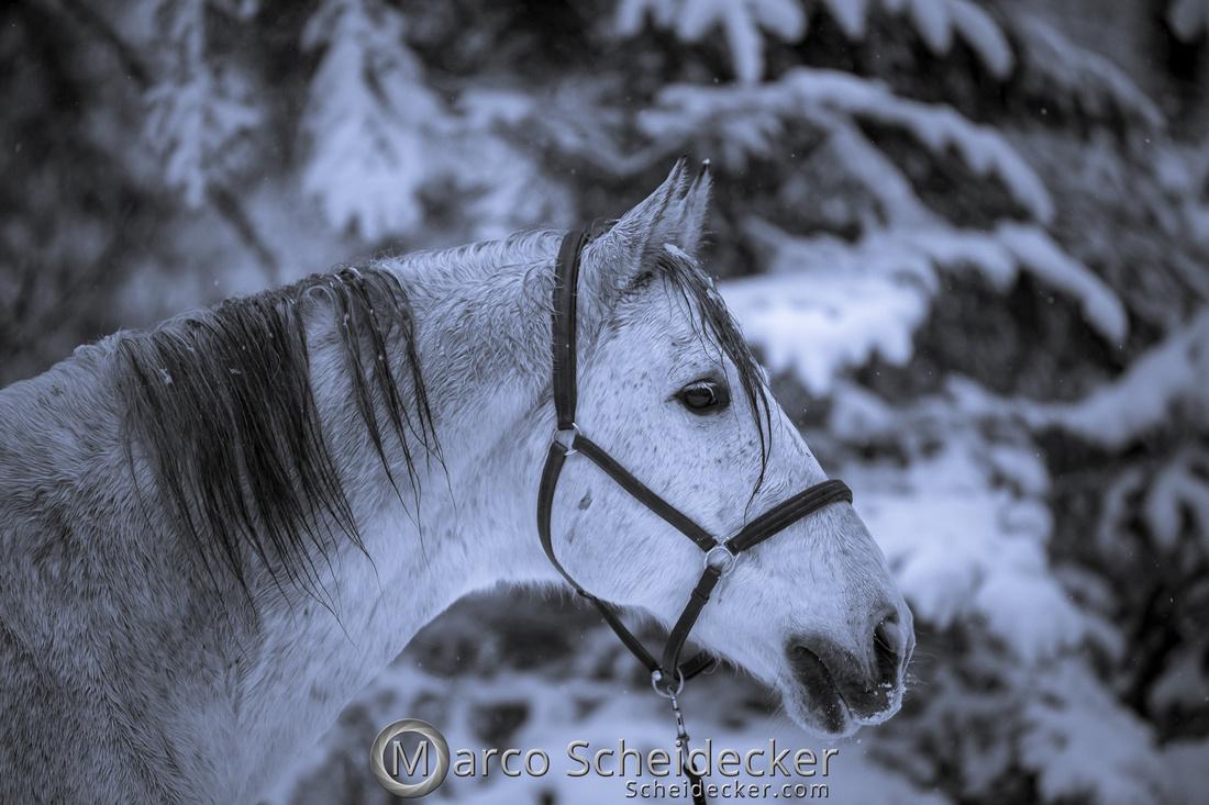 C2019-01-05-0213  -  Gregi im Schnee