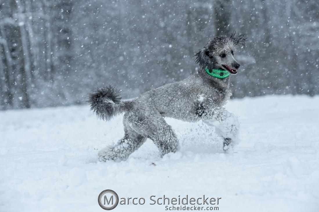 C2019-01-05-2158  -  Anita's 4 Beiner im Schnee
