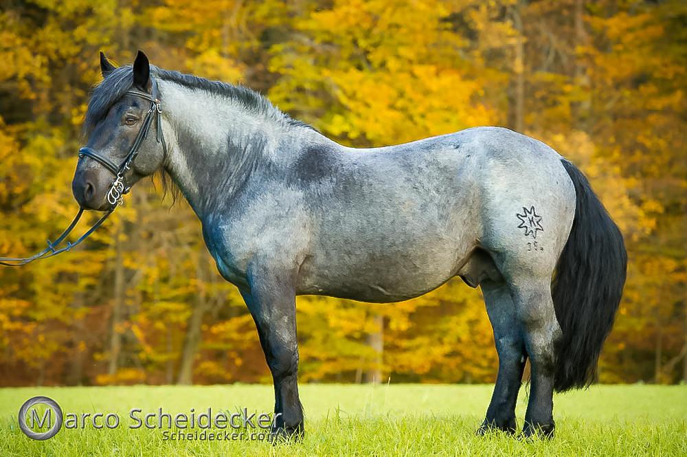 C2017-11-01-2431 - Fresach Elmar XIV