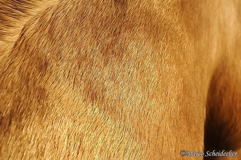 C2011-01-16-1281 - Quarterhengst Buck