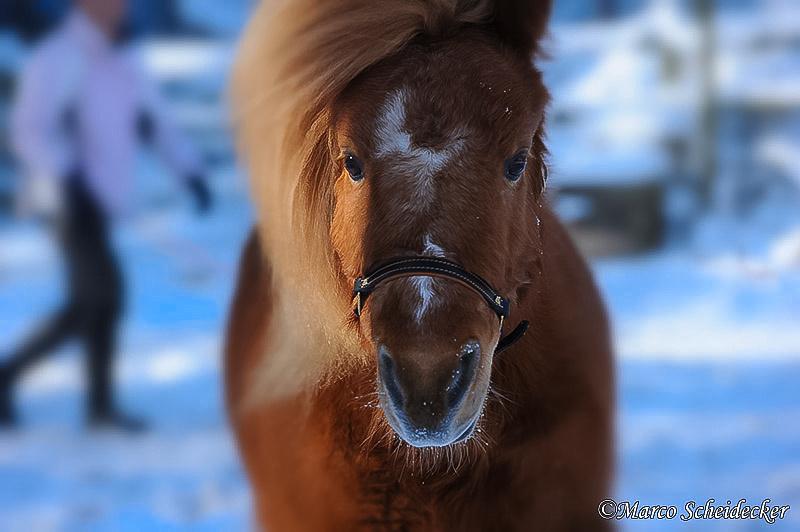 C2012-02-05-0304_S - Ponydame Iren