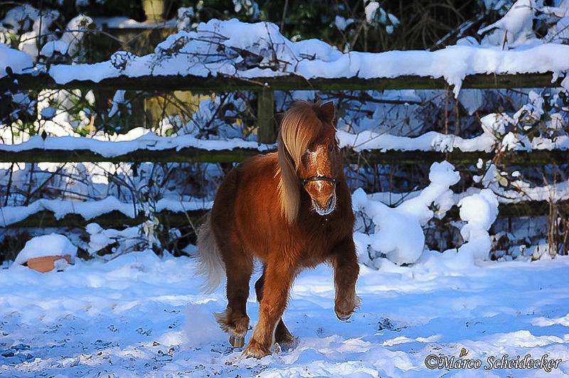 C2012-02-05-0371 - Ponydame Iren