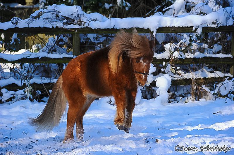 C2012-02-05-0373 - Ponydame Iren