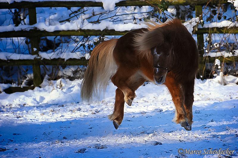 C2012-02-05-0394 - Ponydame Iren