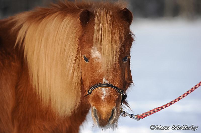 C2012-02-05-0565 - Ponydame Iren