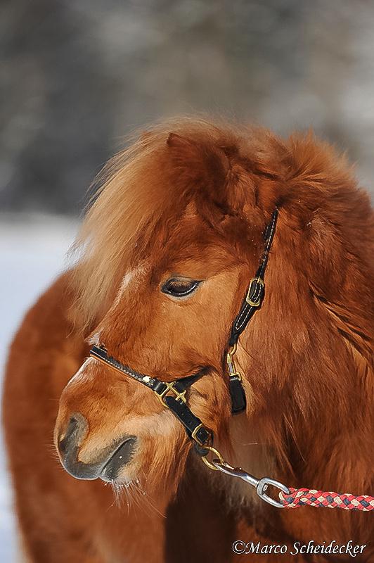 C2012-02-05-0601 - Ponydame Iren