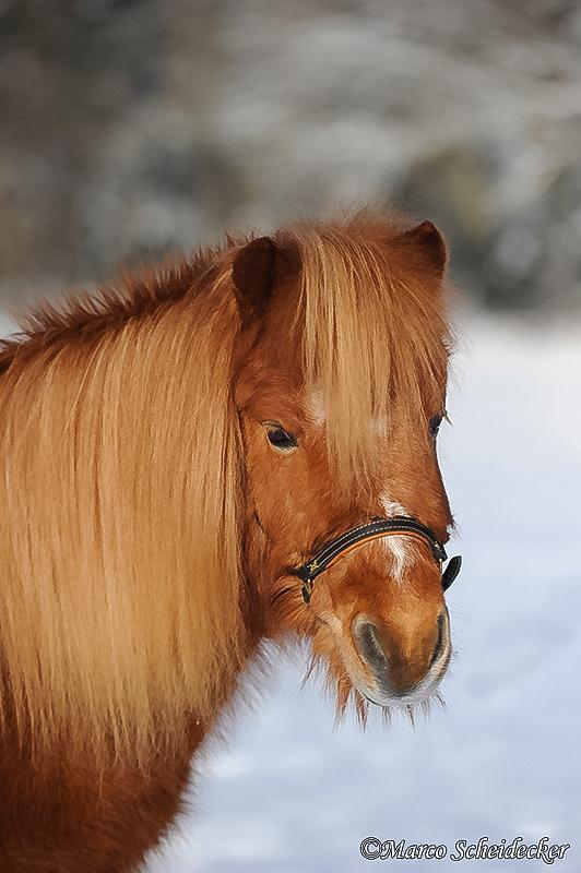 C2012-02-05-0613 - Ponydame Iren