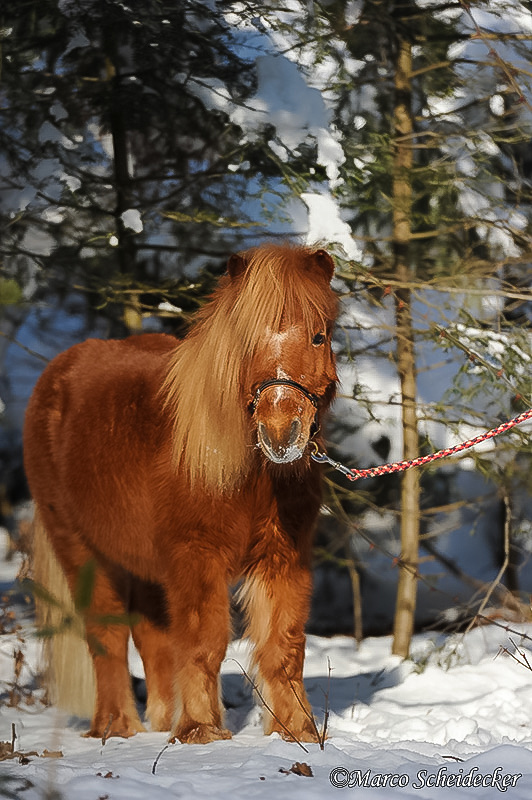 C2012-02-05-0649 - Ponydame Iren