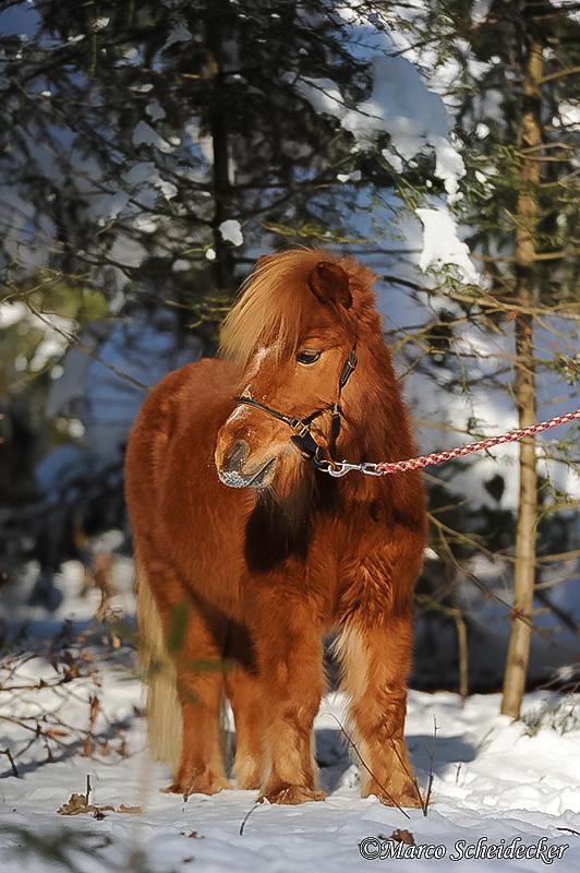 C2012-02-05-0667 - Ponydame Iren