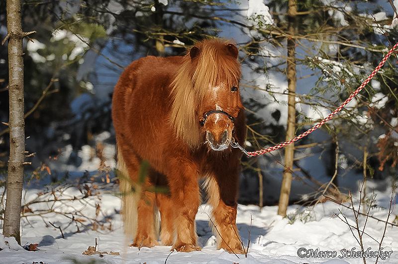 C2012-02-05-0674 - Ponydame Iren