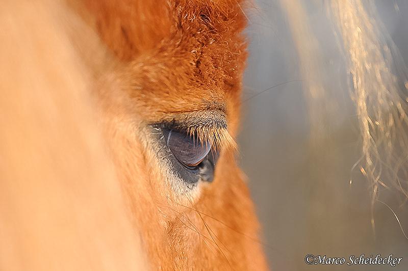 C2012-02-05-0857 - Ponydame Iren